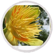 Tulip Tree Flowers Round Beach Towel by Tina M Wenger