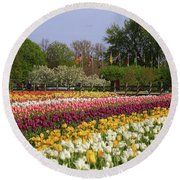 Tulips In Rows Round Beach Towel by Rachel Cohen