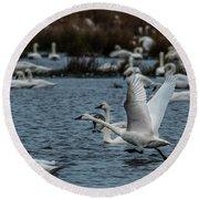 Tundra Swan And Liftoff Head Start Round Beach Towel