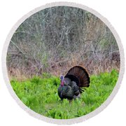 Round Beach Towel featuring the photograph Turkey And Cabbage by Bill Wakeley