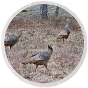Turkey Trio 1153 Round Beach Towel by Michael Peychich
