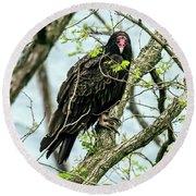 Turkey Vulture Portrait Round Beach Towel