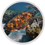Round Beach Towel featuring the photograph Turtle And Shark Swimming At Ocean Reef Park On Singer Island Florida by Justin Kelefas