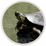 Turtle Bask Round Beach Towel