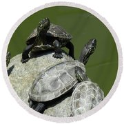 Turtles At A Temple In Narita, Japan Round Beach Towel