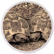Round Beach Towel featuring the photograph Turtles Pair by Gina Dsgn