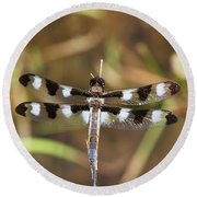 Twelve-spotted Skimmer Round Beach Towel