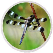 Round Beach Towel featuring the photograph Twelve Spotted Skimmer by Rodney Campbell