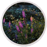Twilight Lupine Round Beach Towel