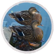 Twin Beaks Round Beach Towel