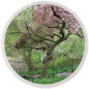 Twisted Cherry Tree In Central Park Round Beach Towel