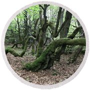 Round Beach Towel featuring the photograph Twisted Trunks Of Beech Trees - Old Beech Forest by Michal Boubin