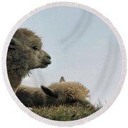 Two Alpaca Round Beach Towel