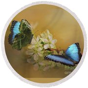 Two Blue Morpho Butterflies On White Spring Flowers Round Beach Towel by Janette Boyd