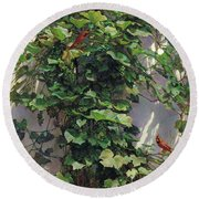 Round Beach Towel featuring the painting Two Cardinals On The Vine Tree by Svitozar Nenyuk