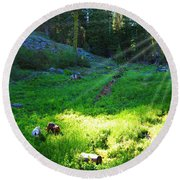 Two Dogs In The Meadow Round Beach Towel by Jennifer Muller