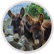 Two Donkeys Round Beach Towel by Patricia Hofmeester