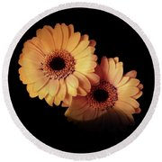 Two Gerberas Light And Shadow Round Beach Towel