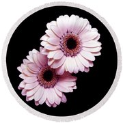 Two Gerberas On Black Round Beach Towel