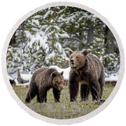 Two Grizzly Bears Round Beach Towel