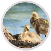 Two Little Goslings Round Beach Towel