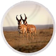 Two Male Pronghorn Antelopes In Alberta Round Beach Towel
