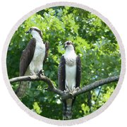 Two On A Limb - Osprey Round Beach Towel by Donald C Morgan