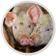 Two Pigs Round Beach Towel