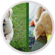 Two Puppies Two Yellow Labs Round Beach Towel