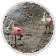 Two Roseate Spoonbills 2 Round Beach Towel by Carol Groenen