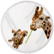 Two Rothschild's Giraffes Close Together Round Beach Towel