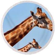 Two Rothschild's Giraffes  Round Beach Towel