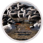 Two Royal Terns Arguing At The Beach Round Beach Towel