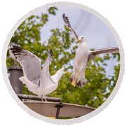 Two Seabird Fighting Round Beach Towel