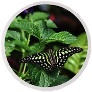 Two Tailed Jay Butterflies- Graphium Agamemnon Round Beach Towel