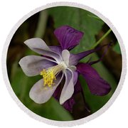 Round Beach Towel featuring the photograph Two Toned Columbine by Jean Noren