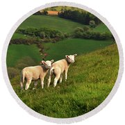 Two Welsh Lambs Round Beach Towel