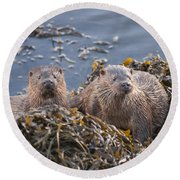 Two Young European Otters Round Beach Towel