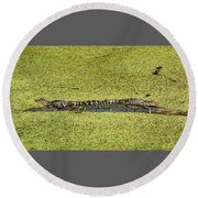 Round Beach Towel featuring the photograph Two Young Gators by Steven Sparks