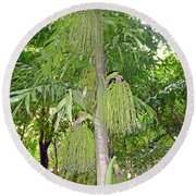 Round Beach Towel featuring the photograph Under A Tropical Tree by Francesca Mackenney