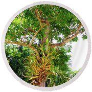 Round Beach Towel featuring the photograph Under A Tropical Tree M by Francesca Mackenney