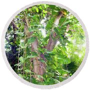 Round Beach Towel featuring the photograph Under A Tropical Tree With Vines by Francesca Mackenney
