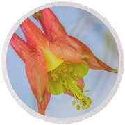 Under A Wild Columbine Round Beach Towel by Barbara Bowen