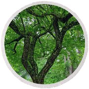 Round Beach Towel featuring the photograph Under The Shade Tree by Tikvah's Hope