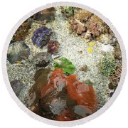 Round Beach Towel featuring the photograph Under Water Life by Carol Lynn Coronios