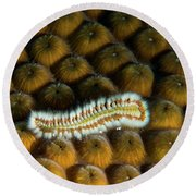 Round Beach Towel featuring the photograph Undulating Bristle Worm by Jean Noren