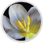 Round Beach Towel featuring the photograph Unfolding Tulip. by Terence Davis