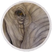 Up And Close With Mr. Elephant Round Beach Towel