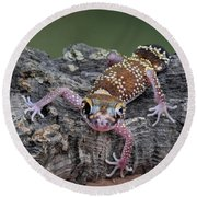 Round Beach Towel featuring the photograph Up And Over - Gecko by Nikolyn McDonald