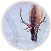 Up Close And Personal Round Beach Towel